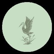 Jade Sun School of Tai Chi and Qi Gong